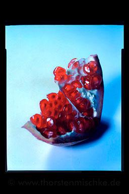 Foto: ranatapfel © www.ThorstenMischke.de Fotodesign Kiel